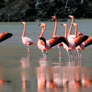 بنیادصدای ایرانیان کمیته محیط زیست فلامینگو voi voiceofiranian